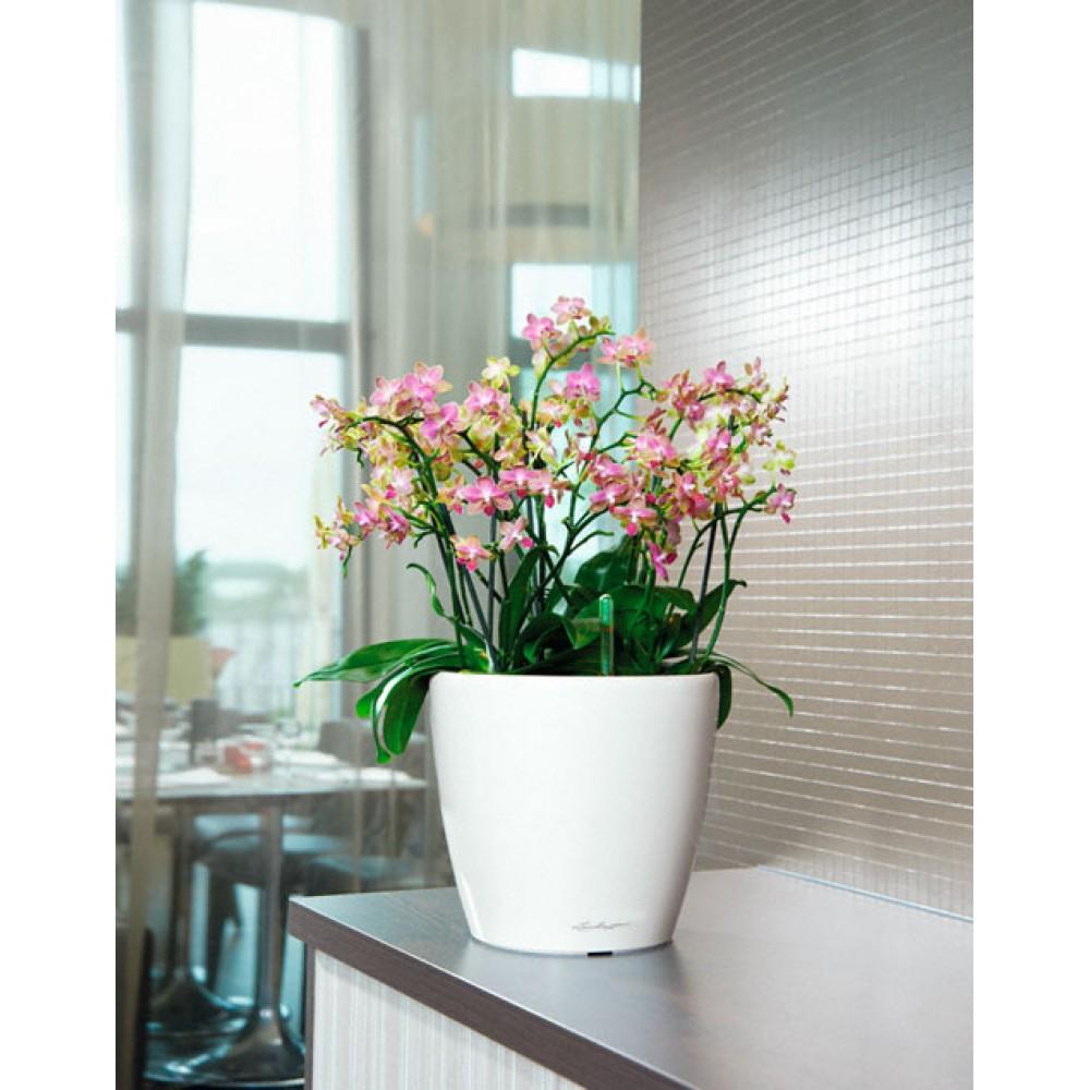 Flowerpot Lechuza CLASSICO Premium LS 43