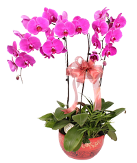Orchids for the holiday!